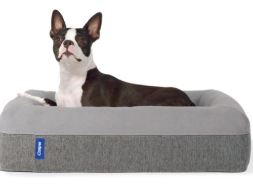 Une marque de literie lance un lit pour chien !